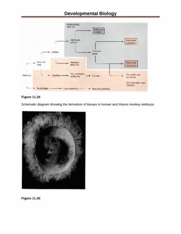 developmental-biology-figures-2-docx