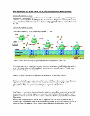 biob10y-fsg-3-docx
