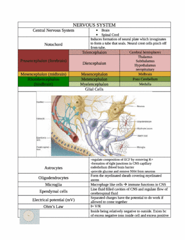 nervous-system-aced-the-test-and-got-96-