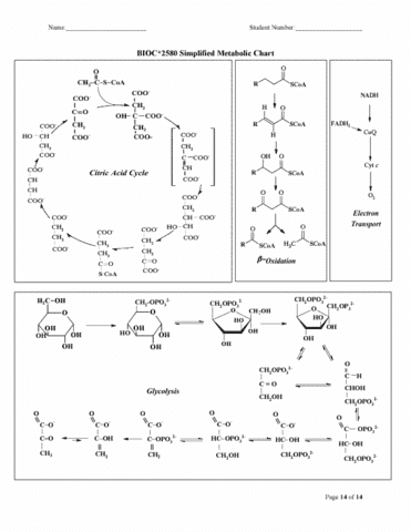 metabolic-cheat-sheet-pdf