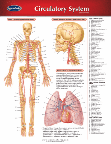 circulatory-system-reference-guides