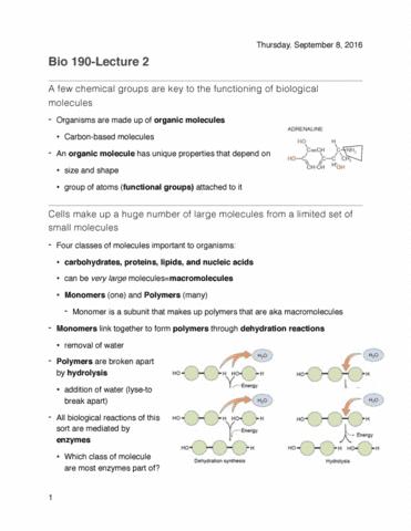 biol-190-lecture-2-biological-molecules
