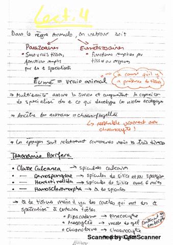 bio2535-lecture-4-porifera