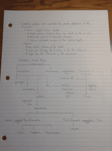 biol-273-lecture-9-phys-9