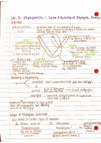 ee-biol-185-lecture-5-5-phylogenetics