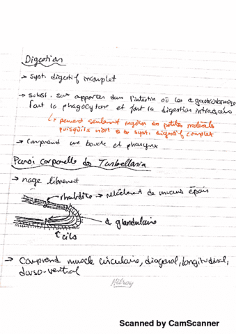 bio2535-lecture-8-platyhelminthes-digestion-fin-