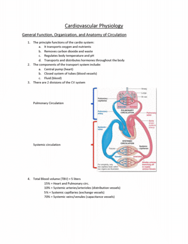 physiology-1021-lecture-6-cardiovascular-physiology