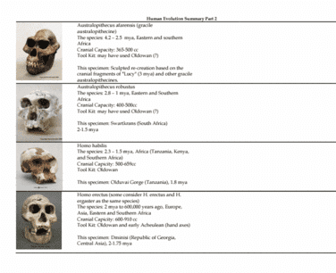 ge-clst-m71cw-lecture-3-human-origins-summary-sheet-2