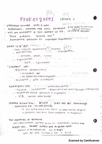 bis-2a-lecture-11-prokaryotes
