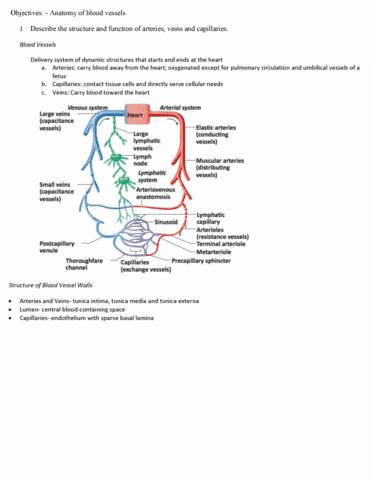 biol-4260-midterm-ha-sg-chpt23-blood-vessels