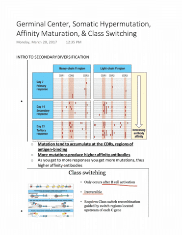 mimm-214-lecture-29-germinal-center-somatic-hypermutation-affinity-maturation-class-switching