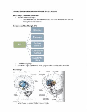rehabilitation-sciences-3062a-b-lecture-4-lecture-4