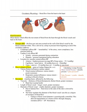 kn-252-lecture-4-circulatory-physiology-blood-flow-from-the-heart-to-the-heart