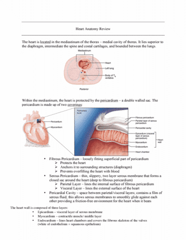 kn-252-lecture-6-heart-anatomy-review