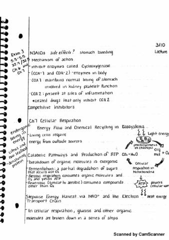 bio-sc-1500-lecture-7-cellular-respiration