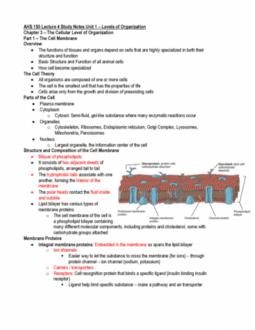 ahs-150-lecture-1-ahs-150-lecture-4-study-notes-unit-1-chapter-3-1-