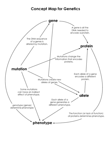 Mutation Concept Map.Bio 351 Midterm Concept Map Oneclass