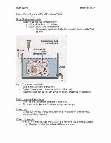 hlsc 2110u lecture notes - winter 2019, lecture 19 - extracellular fluid,  fluid compartments, water conservation
