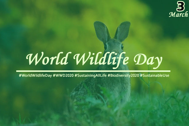 The Most Inspiring Opportunities on 'World Wildlife Day' to protect & conserve Endangered Species and Biodiversity