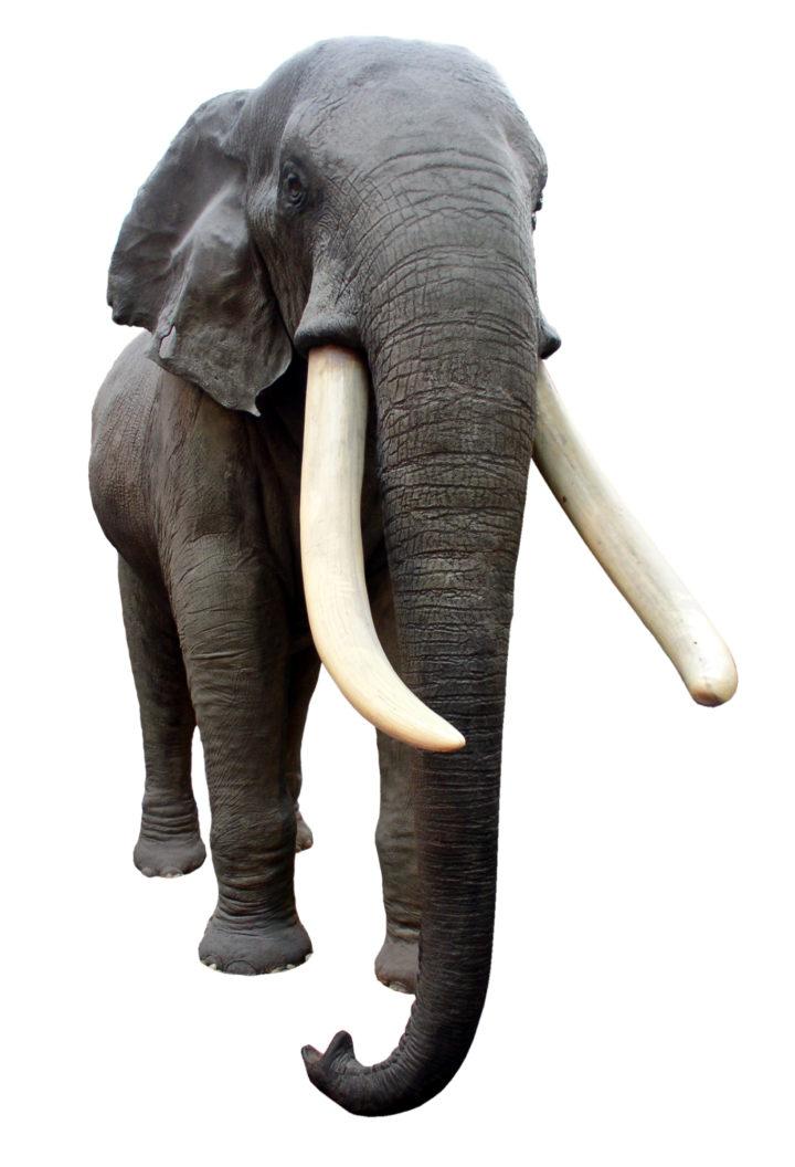 Elephant 1477059