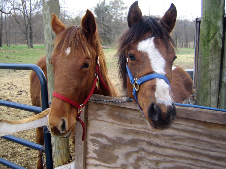 The Colt And Filly 1 1559561
