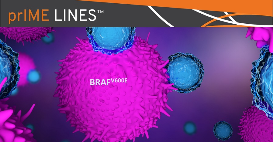 immunotherapy-effective-in-BRAF-mutant-NSCLC