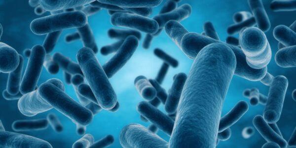 Bacteria Coronavirus