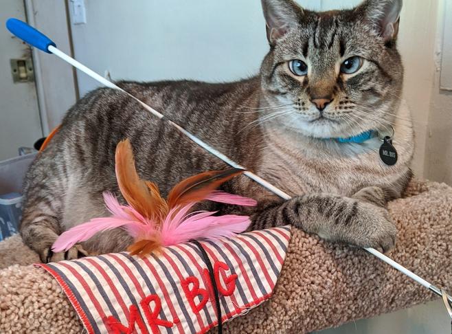 Mr. Big Resident Inn Cat  Innkeeper Photo