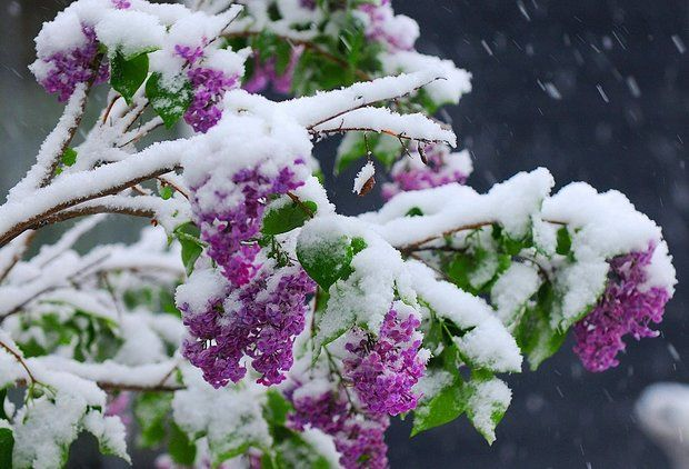 Early May snowfall possible for hills near Syracuse, Buffalo