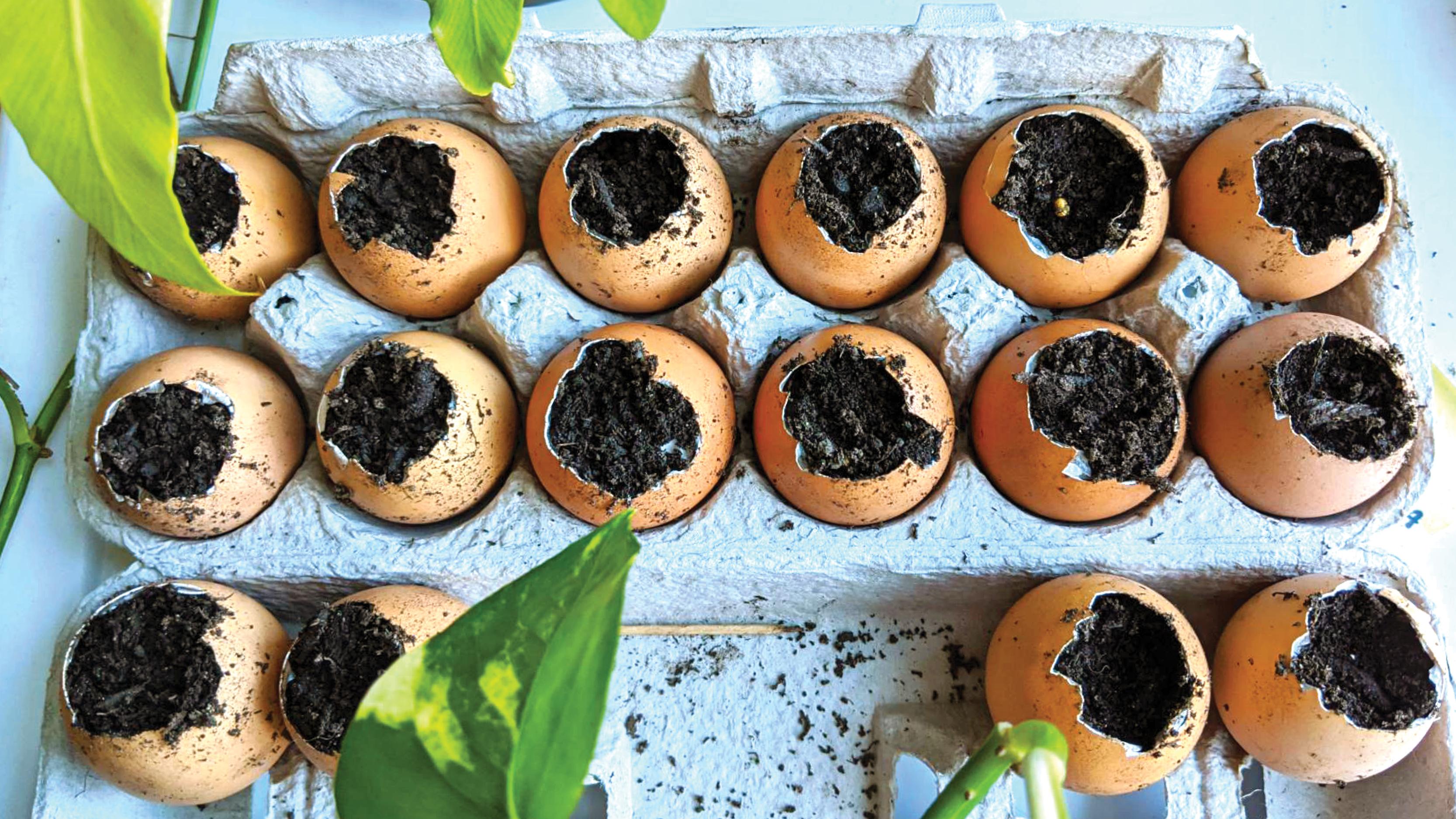 Garden in an Egg Carton: Science Activity for Grades K–5