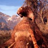Far Cry Primal Feels Like Where The Series Was Always Meant To Go