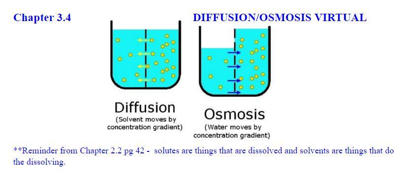 Review And Virtual Labs Diffusion And Osmosis Kathy
