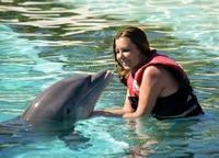 Dolphin lisa3
