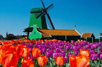 Amsterdam super saver 3 city tour plus zaanse schans windmills in amsterdam 115706