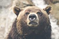 Nature animal fur dangerous