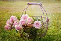 Roses 1566792 1280 1024x683