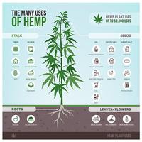 hemp plant infograph