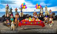 Haute dogs vm17 bp