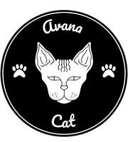 Avana cats   draft