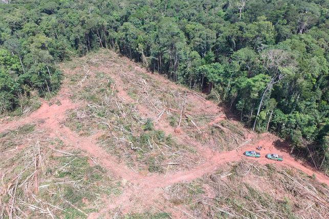 Destrucción de bosque