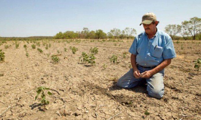 Sequía- Honduras