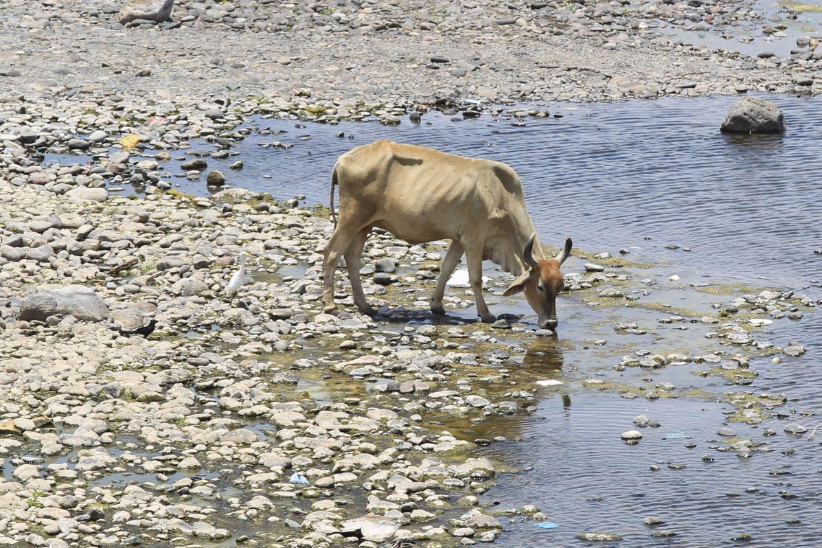 Sequía Honduras