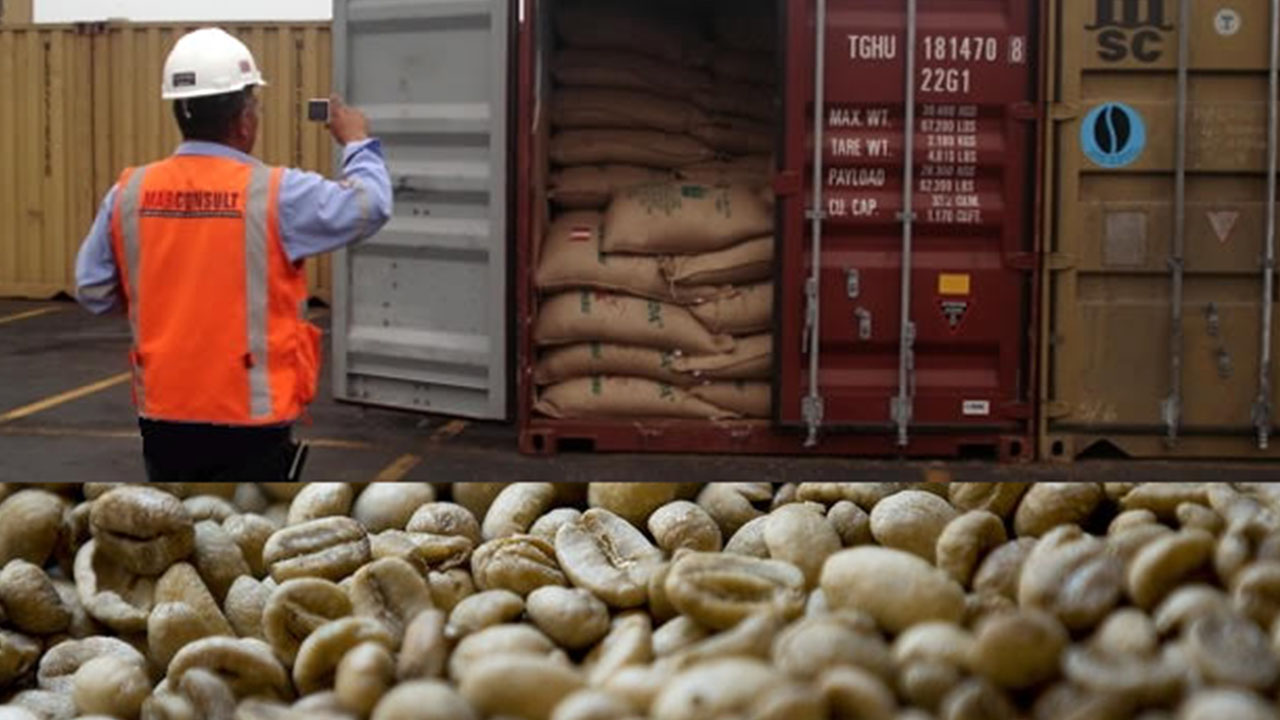 Disminuyen las exportaciones del café hondureño