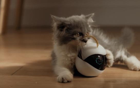 Ebo, el robot mascota creado para entretener a los gatos