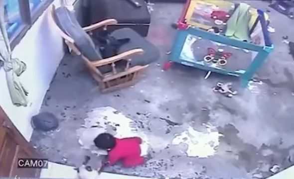 Gata salva a niño
