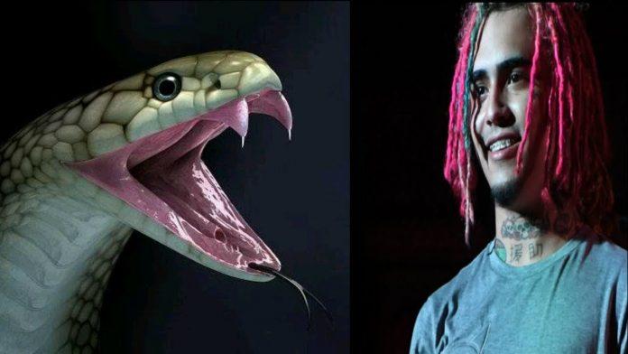 Serpiente muerde a rapero Lil Pump en plena grabación de un video