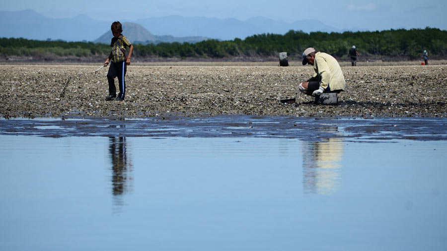 ¡Alarma! Parásito ataca a los moluscos, crustáceos y bivalvos en el Golfo de Fonseca