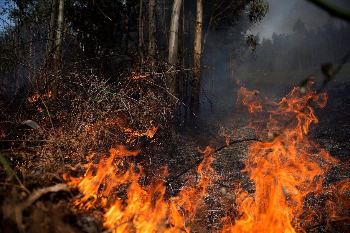 Unas 1,200 hectáreas de bosque han sido consumidas por incendios en 2020