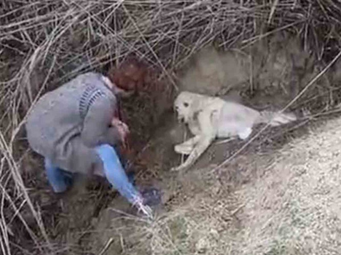 Maltrato animal: entierran vivo a un perro, mira como fue rescatado