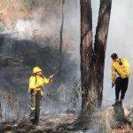 Incendios consumen más de 2.500 hectáreas de bosque en Honduras